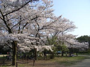 4月5日お花見 016