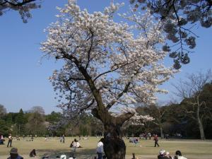 4月5日お花見 018