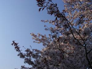 4月5日お花見 030