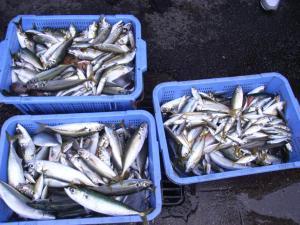 6月28日 魚釣り 010