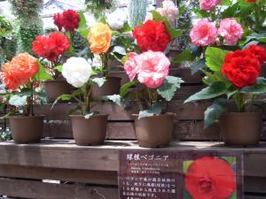 神戸花鳥園 015