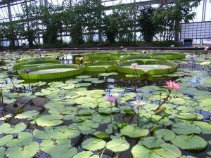 神戸花鳥園 016