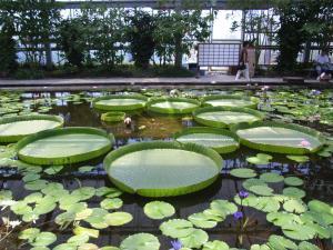 神戸花鳥園 017