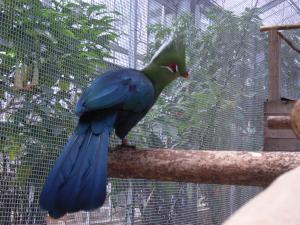 神戸花鳥園 028