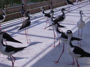 神戸花鳥園 033