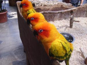 神戸花鳥園 022