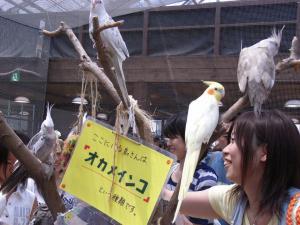 神戸花鳥園 023
