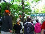 龍安寺を散策