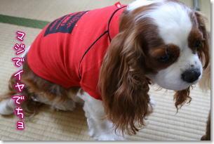 ラインストーン付きの赤Tシャツ
