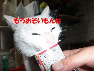 BLOG2008_04220083m