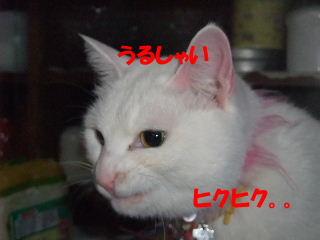 BLOG2008_04220088m