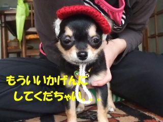BLOG2008_04130269m