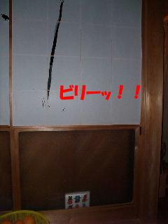 BLOG2008_05030119たて