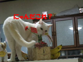BLOG2008_05130011m