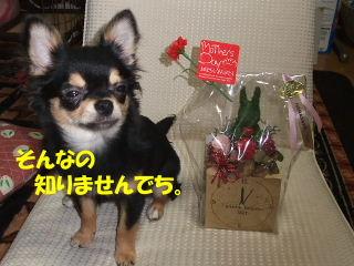 BLOG2008_05130047m