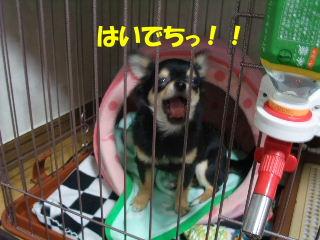 BLOG2008_05100014m