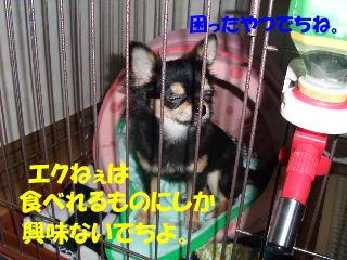 BLOG2008_05100013m