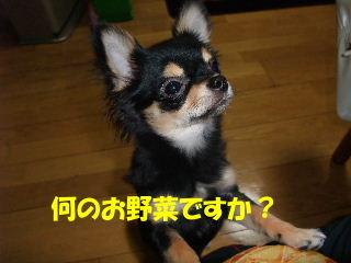 BLOG2008_05180010m