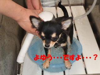 BLOG2008_041303.jpg