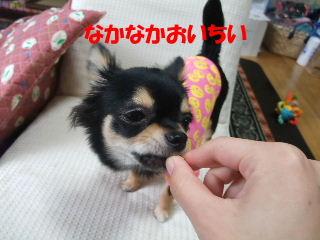 BLOG2008_05180043.jpg