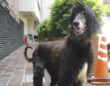 HARU2008.DogShelter
