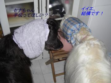 暑中お見舞い5 2008.08