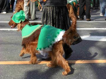 St Patrick's day 7