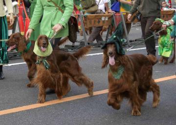 St Patrick's day 8