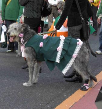 St Patrick's day 10