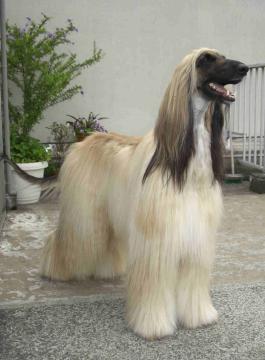 Gaudi shampoo2 2008.06.10
