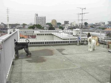 屋上にて 2008may