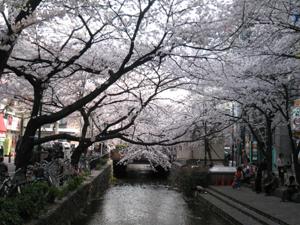 2008.4.5高瀬川blog03