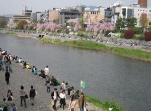 2008.4.5鴨川blog01