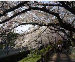2008.4.6芥川blog01