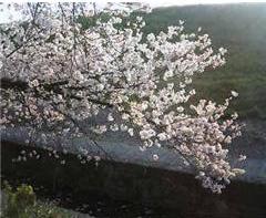 2008.4.6芥川blog92
