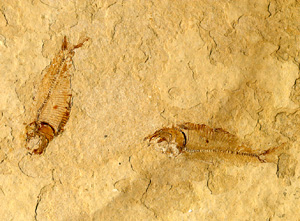 化石blog02