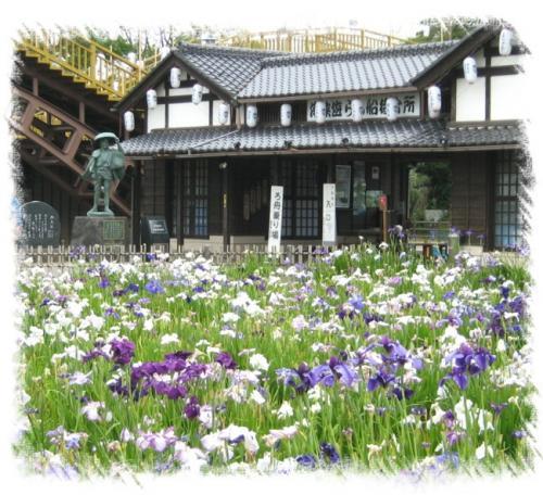 前川あやめ園2