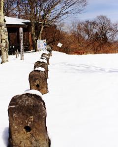見晴台の雪