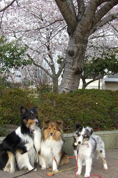 桜の木の下で3ショット