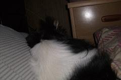 ユキの寝る位置1