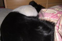 ユキの寝る位置2