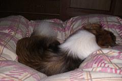 凛の寝る位置