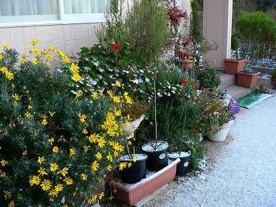 軒下の花壇