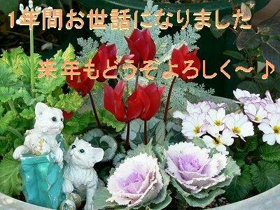 P1100147s.jpg