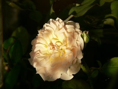 メアリマグダレン