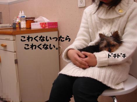 ワクチン5