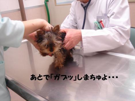 ワクチン7