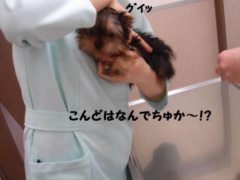 ワクチン8