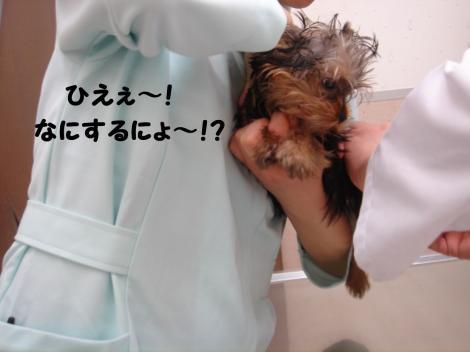 ワクチン9
