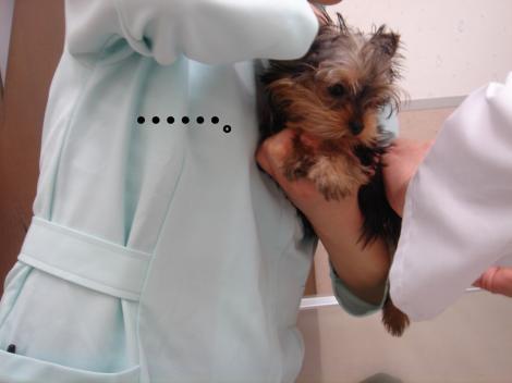 ワクチン11